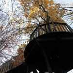 BlueForest Treehouses